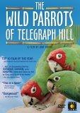 Wild Parrots of Telegraph Hill DVD